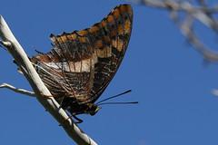Namibia - Butterflies