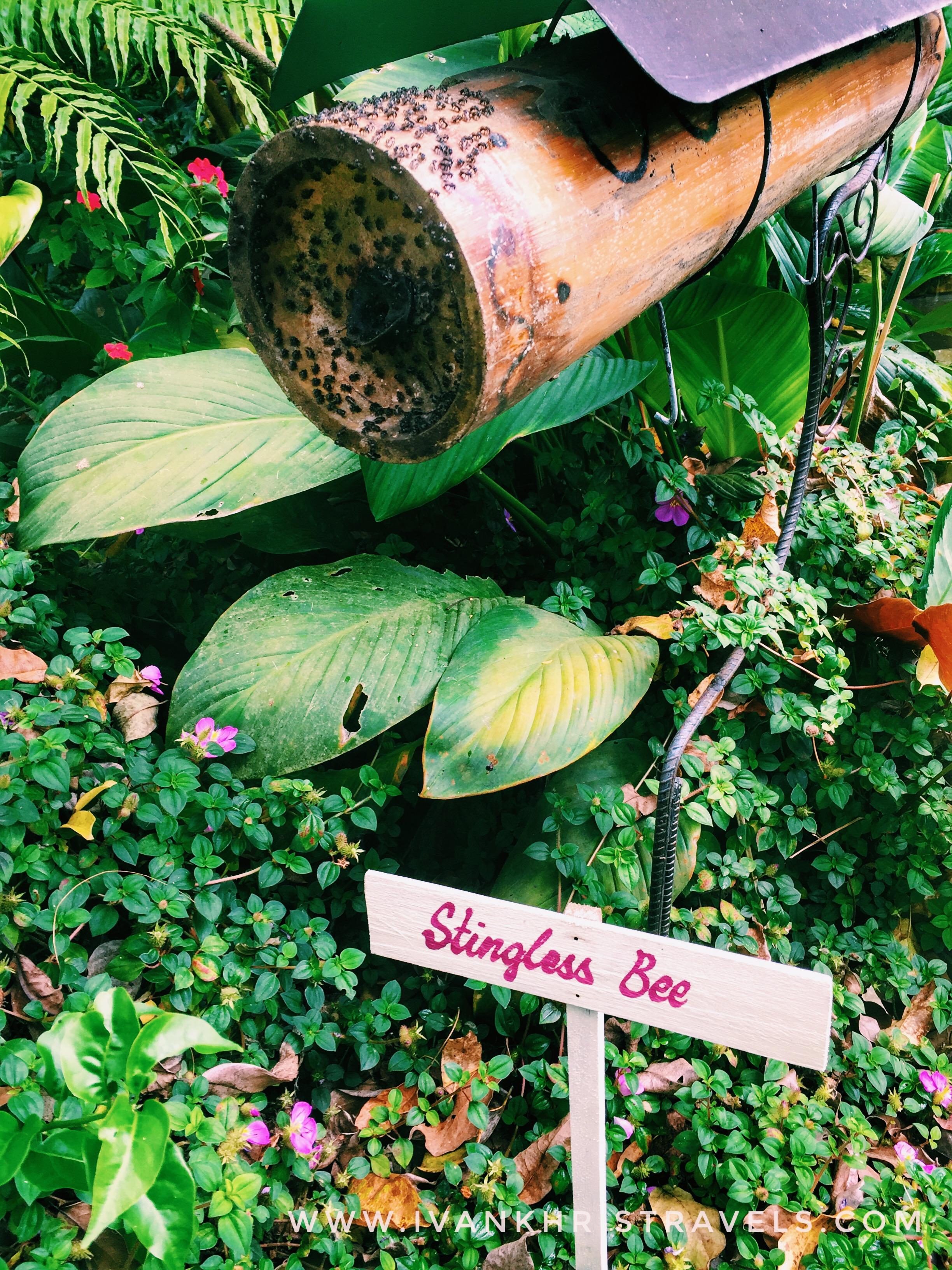 Sonya's Garden sting-less bees