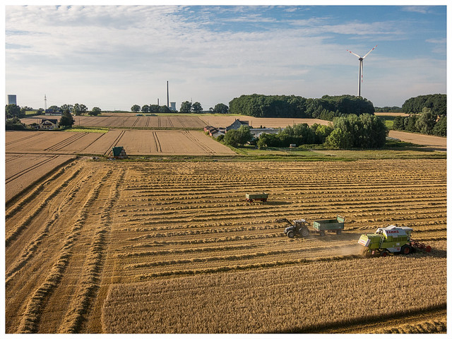 Sommer 2017: Getreideernte