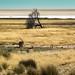 Etosha, Namibia June 2107-32