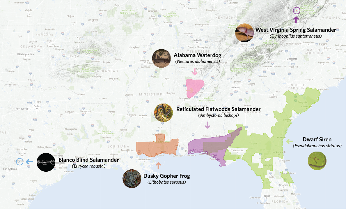 Lets Find The US Amphibians Still Missing From INaturalist - Us amphibian distribution maps
