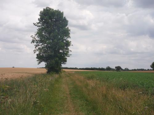 Grassy Field Boundary, towards Pirton
