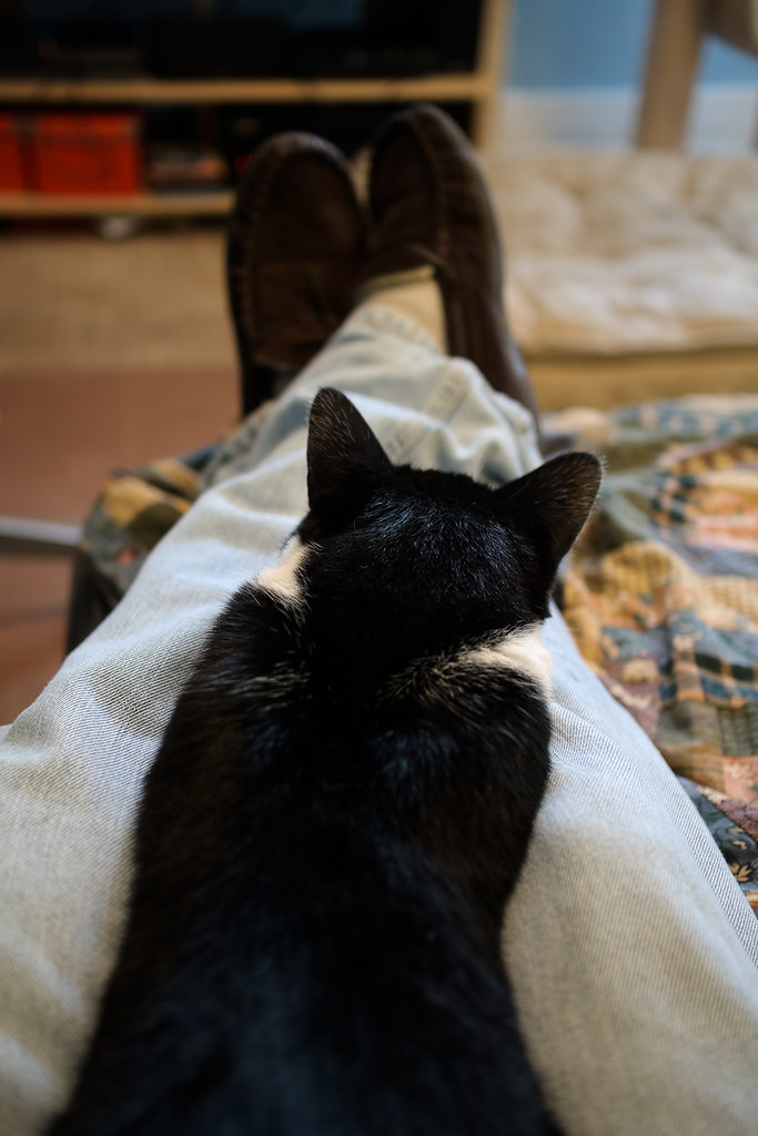 Our black-and-white cat Boo sleeps on my legs