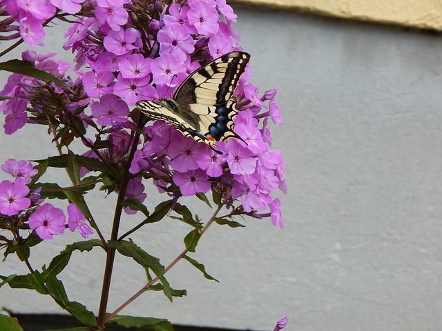 Flüchtiger Besucher , NGIDn480492703, Nikon COOLPIX L830