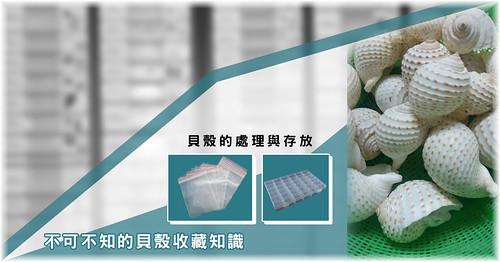 不可不知的貝殼收藏知識 ─ 貝殼的處理與存放