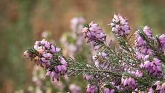 Flowery Fusillade