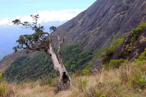 chokramudi munnar kerala tree rocky mountain peak grass