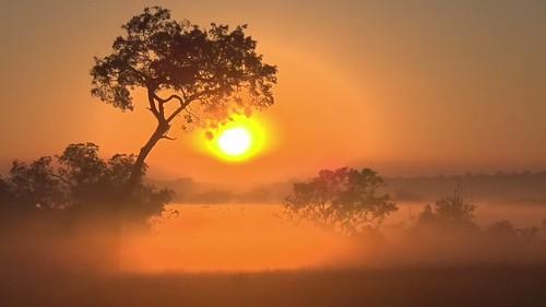 sunrise goldenhour trees africa safarilive 1500v60f