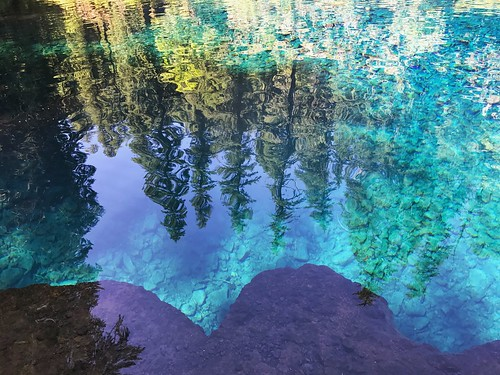 Bluey blue of the blue pool