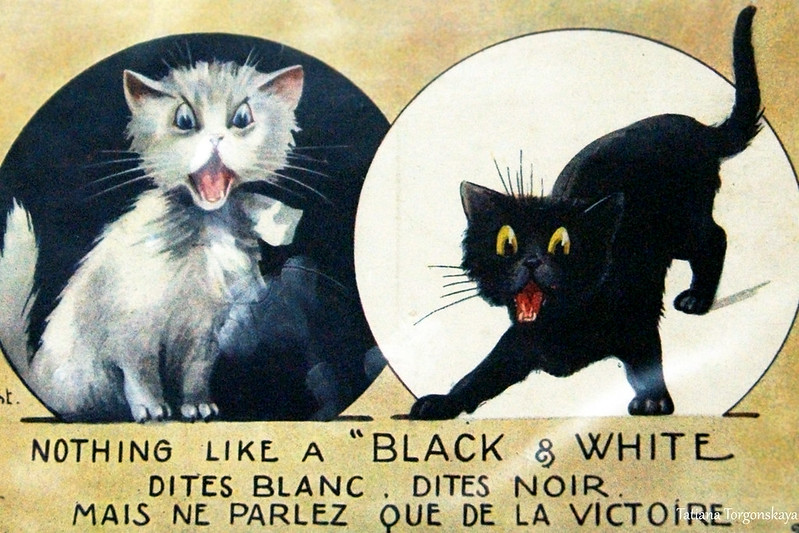 """Открытка """"Черный и белый кот"""""""