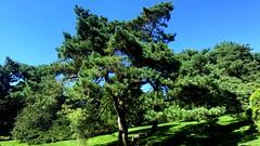 New York Botanical Garden XXX