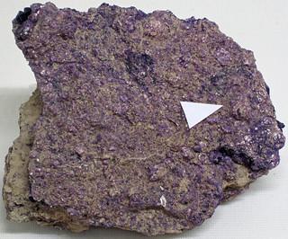 Fluoritized fossiliferous limestone (Mississippian; near Cave-in-Rock, Illinois, USA)