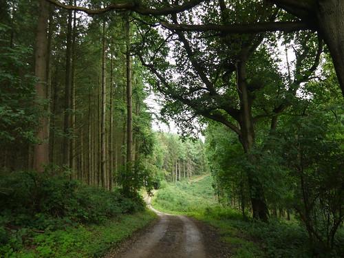 Ashton Wood