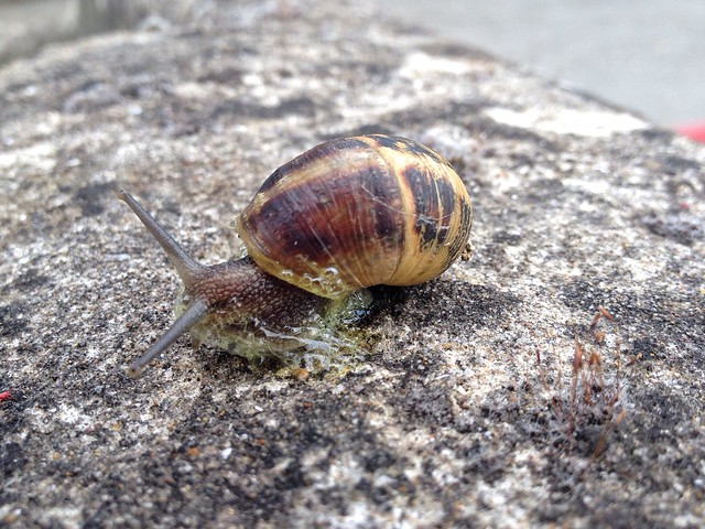 Snail. He was stuck, Apple iPhone 4S, iPhone 4S back camera 4.28mm f/2.4