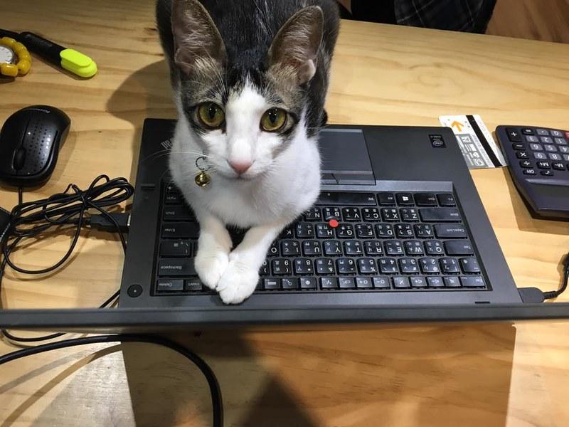 貓趴在筆電上