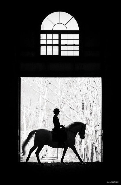 canter silhouette
