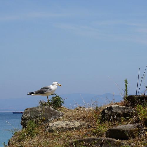 foto Ilhas Cies - Vigo junho'17 24