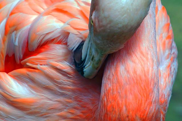 Flamingo, Sony ILCA-77M2, Tamron 16-300mm F3.5-6.3 Di II PZD