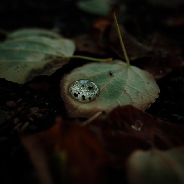夏の落ち葉