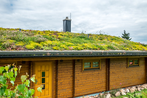 A flower roof