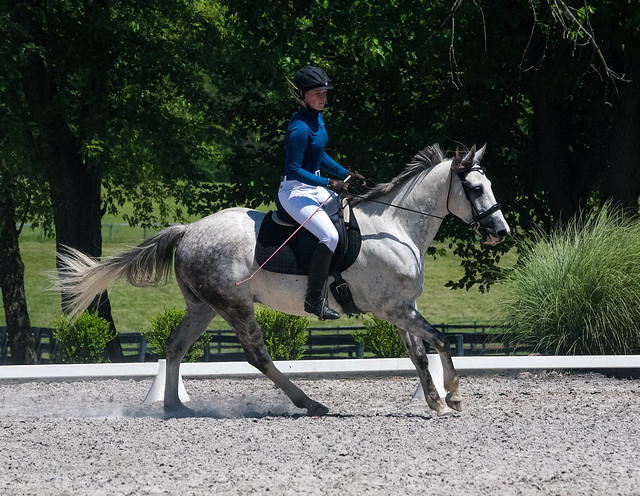 20170709 Grif Dressage Tests-21