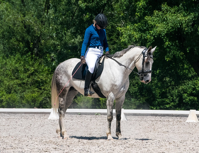 20170709 Grif Dressage Tests-24