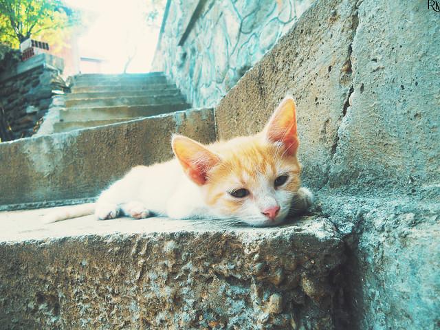 Kitten 3 @catsedition9
