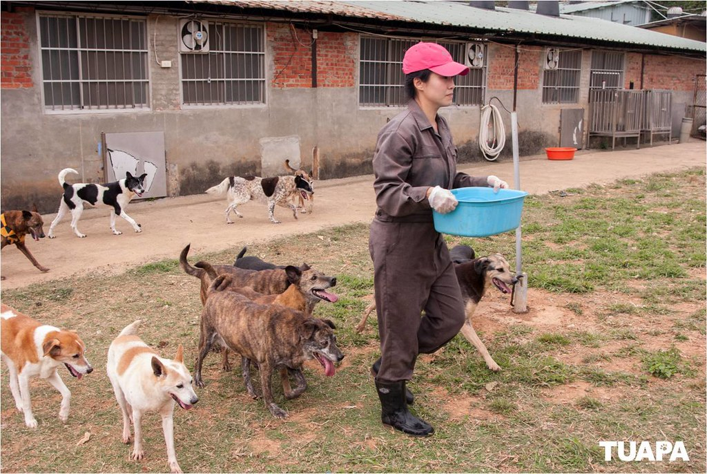 保育場內的狗狗最期待的就是志工來到的休閒時光
