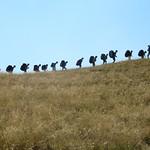 2010 - Traversata Lago Maggiore