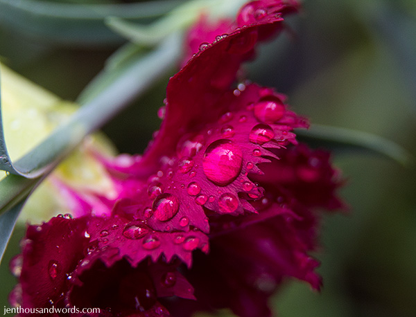 Flowers between showers 19
