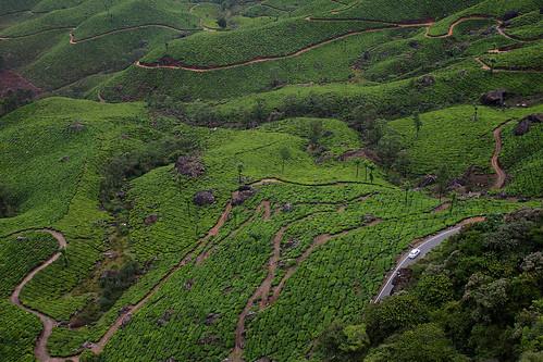 tea garden chokramudi munnar kerala landscape hills footpath