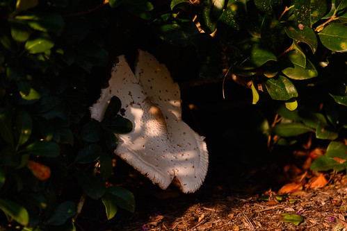 shrub hedge nikon cinco shade bush nikond7100 wyattmartin shadows summer 2017 texas d7100 fungus july ranch landscape cincoranch mushroom