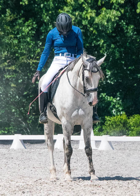 20170709 Grif Dressage Tests-41