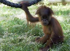Hallo kleiner übt schon mal am Seil zu klettern