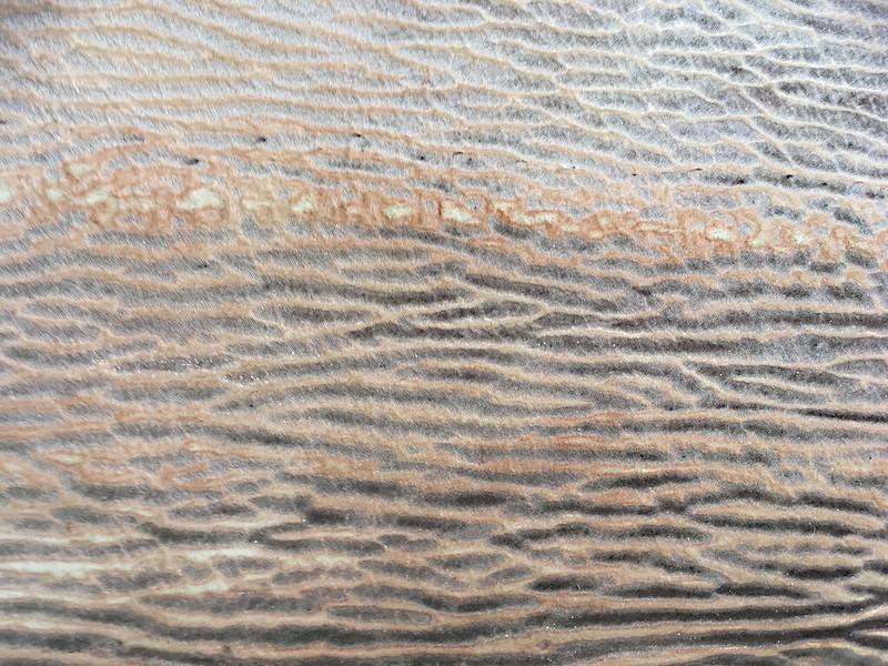 Western Australia - Esperance - shark skin