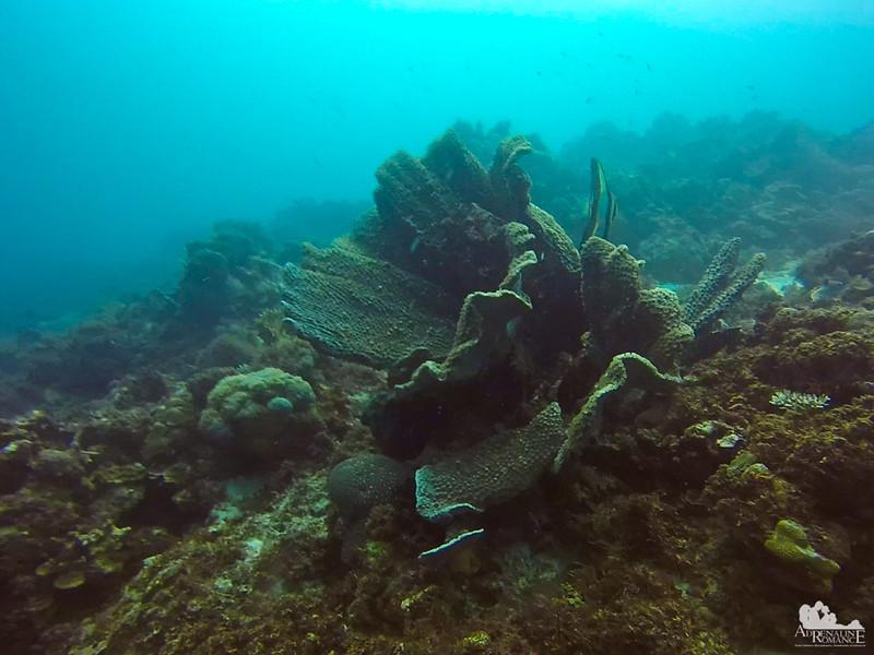 Leaf Coral
