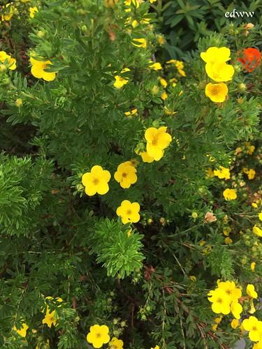 Herb Garden July 2017