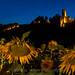 2017-07-05-castello notte girasoli 1 -12017-07-05-castello notte girasoli no-1IMG_7729