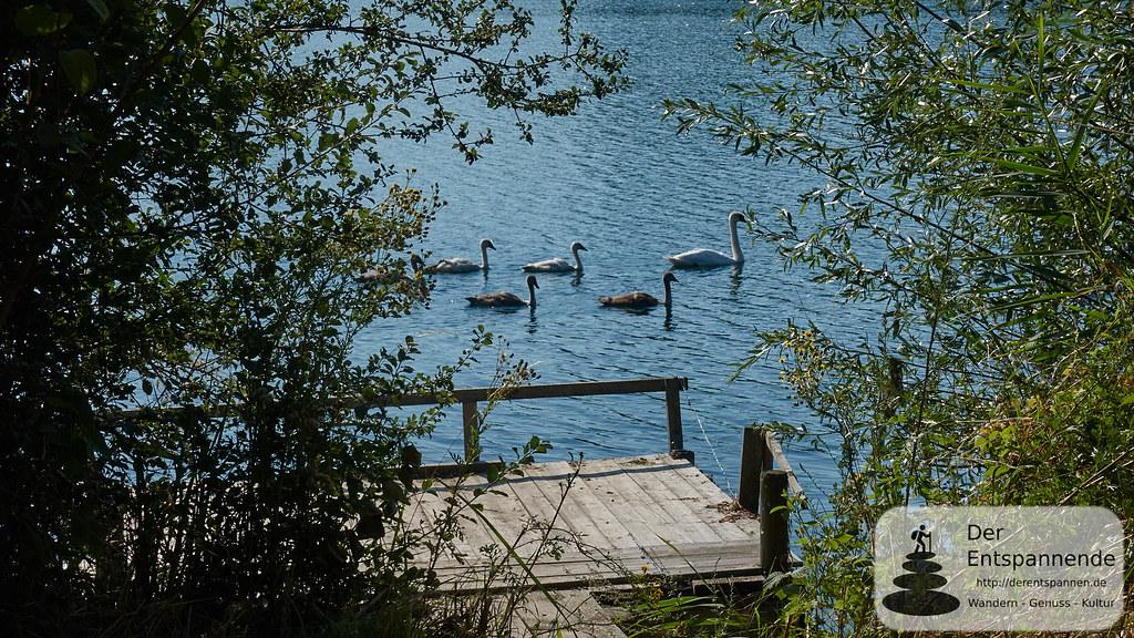 Altrhein-Erlebnispfad bei Eich