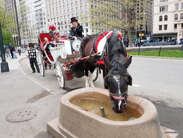horses in New York