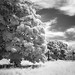 Seattle's Discovery Park Infrared by Ryan McGinty