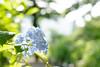 Photo:20170624 Yamagata 1 By BONGURI