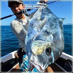 Jum Tabata, da Shimano Brasil com um belo xaréu-branco.  #xareu #pescaamadora #pescaesportiva #pesquesolte #pescaoceanica #fishing #fishinglures #baitcast #angler #catchandrelease #pesca #shimano