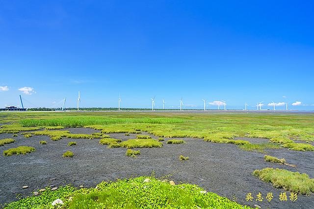 DV05251a--高美濕地,雲林莞草,高美溼地風力發電,台中市,清水區(A7RII,AdobeRGB) - 複製