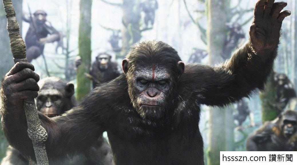 chimp stone 05