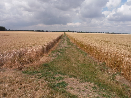 Usually well-cleared path through arable fields