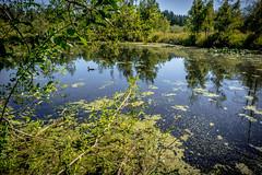 Bassett Pond Natural Area
