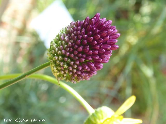 Gartenscvhau Apolda - Sitzenzwischen Kunst und Blumen