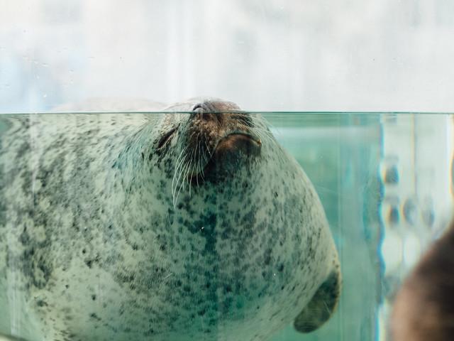 20170718_kyoto_aquarium-11