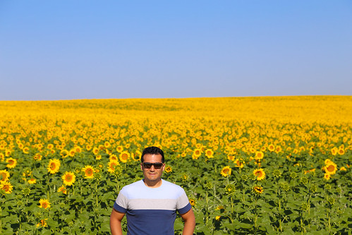 2017 SPM0683 Sam Duarte by sunflowers seen on drive from Sevilla to Zahara de la Sierra, Spain